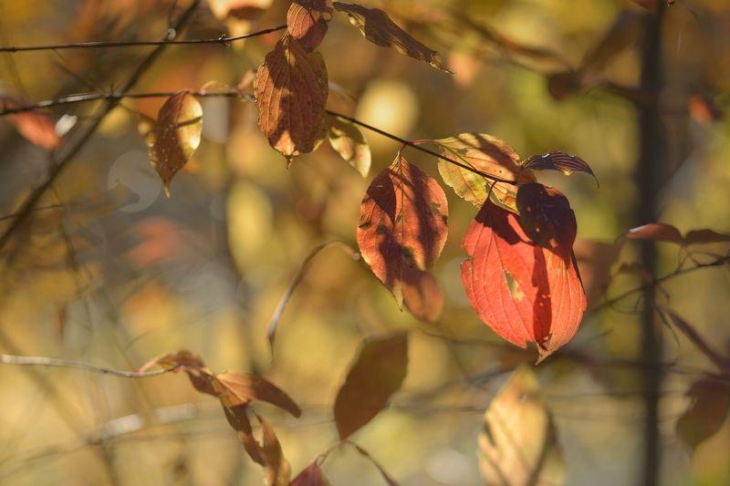 осень листва утро Цвета осениphoto preview