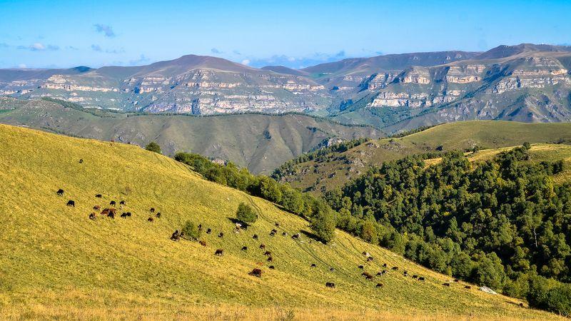 кавказ, осень, горы, животные, природа, тишина, россия На просторах Северного Кавказа.photo preview