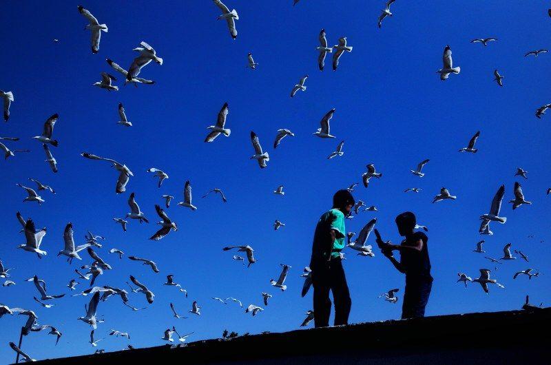 Seagullsphoto preview
