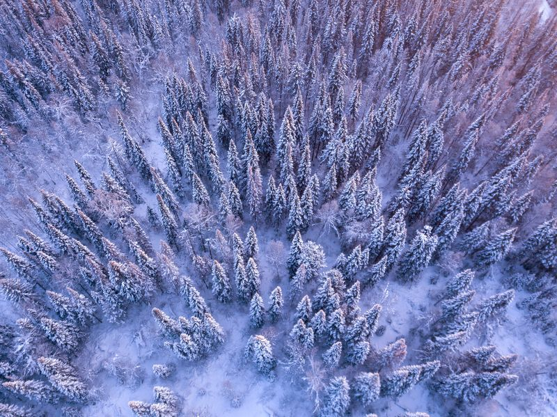 елки, снег, зима, голубое Елкиphoto preview