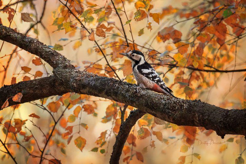 природа, лес, поля, огороды, животные, птицы, макро Осенняя пораphoto preview