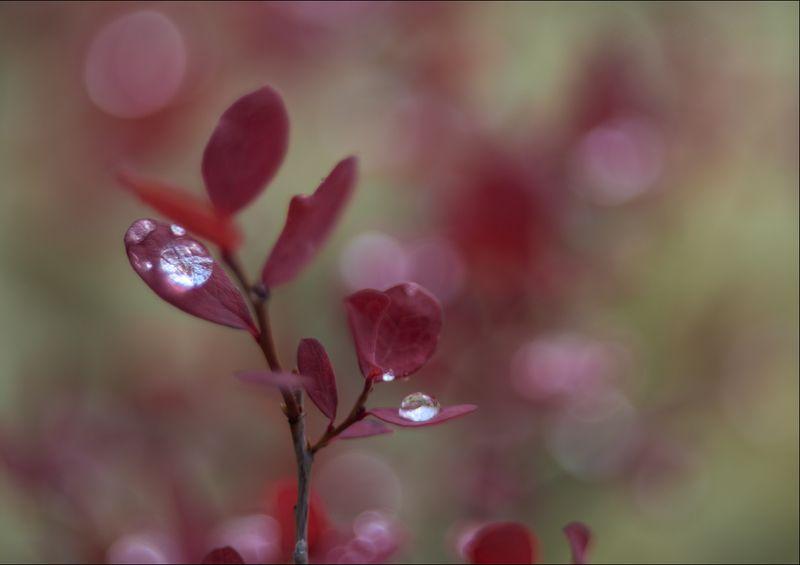 Гелиосное макро флоры горной тундрыphoto preview
