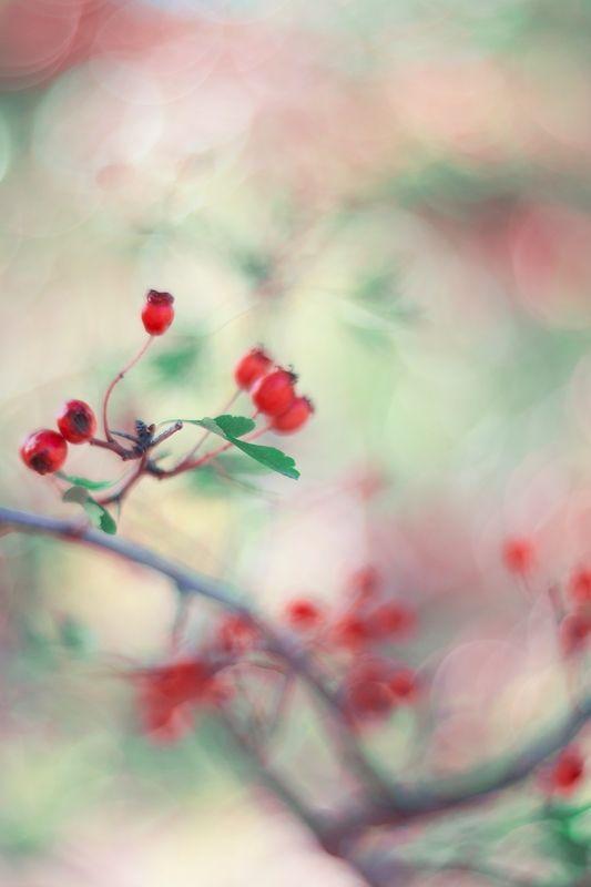 autumn,fruits,flower,bokeh,light,zenit,helios,85mm,nikon,nature,red,blue,green,ligth, Redphoto preview