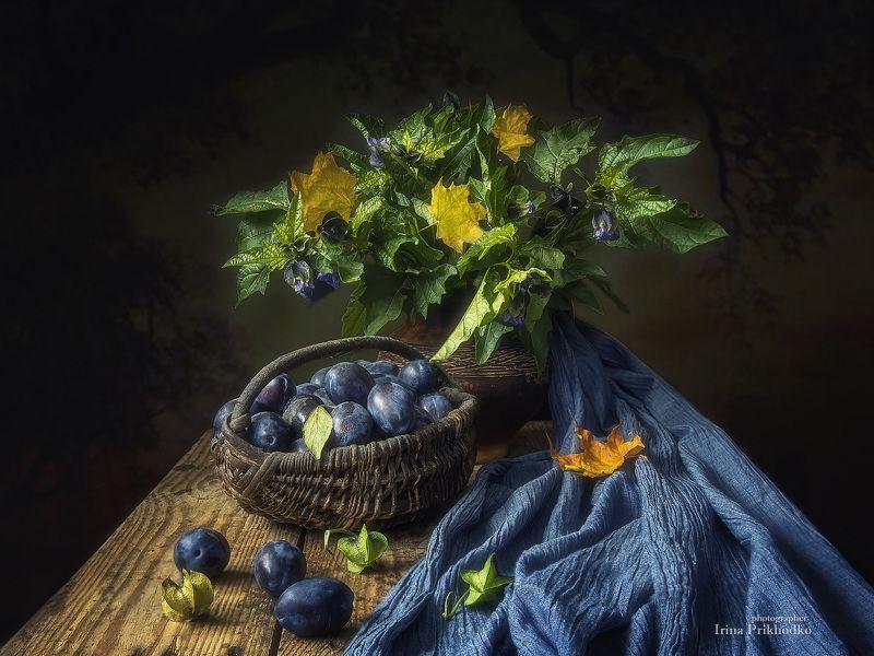натюрморт, осень, урожай, сливы, физалис Натюрморт с физалисом и сливамиphoto preview