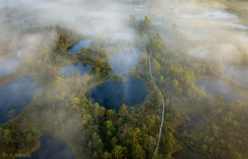 пейзаж, природа, болото, эстония Дорожка в Царство Тумановphoto preview