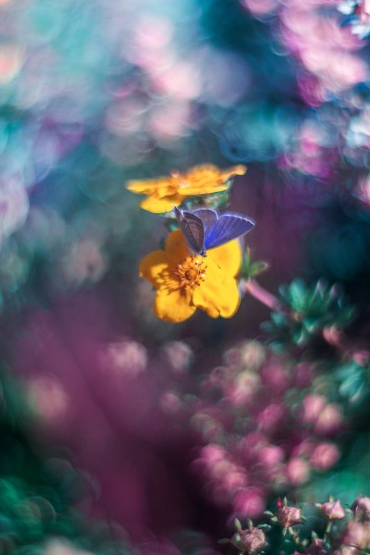 green,blue,bokeh,flowers,butterfly,zenit,helios,nikon,light,nature,exterior, Blue and Pinkphoto preview