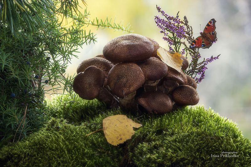 натюрморт, осень, грибы, опята Грибные истории с осенними опятамиphoto preview