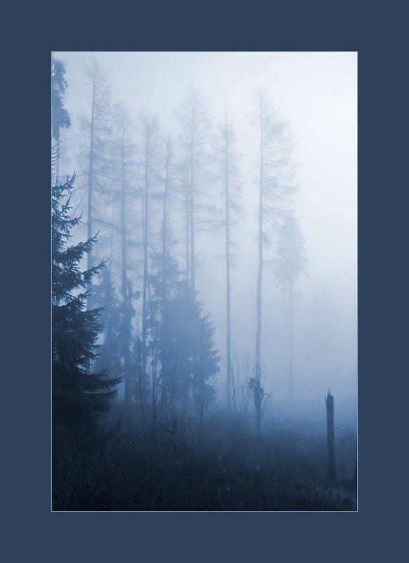 Туманная серия 2(9) тонированнаяphoto preview