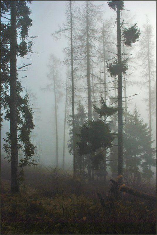 Туманная серия 2 (10)photo preview