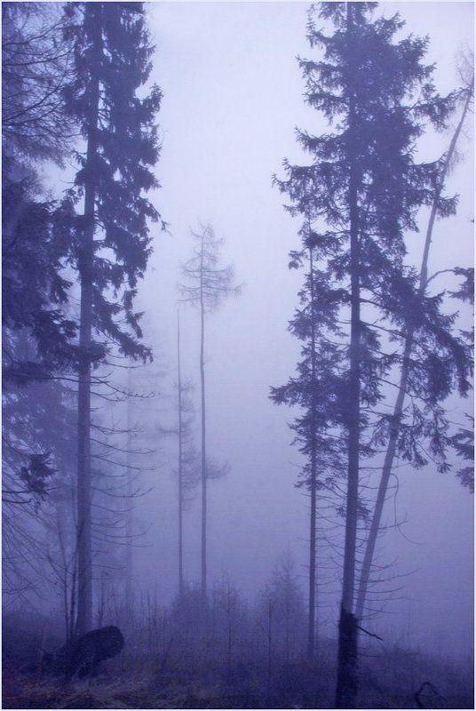 Туманная серия 2 (11)photo preview