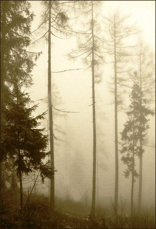 Туманная серия 2 (12)photo preview