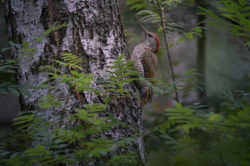 природа, лес, поля, огороды, животные, птицы, макро Юное очарованиеphoto preview