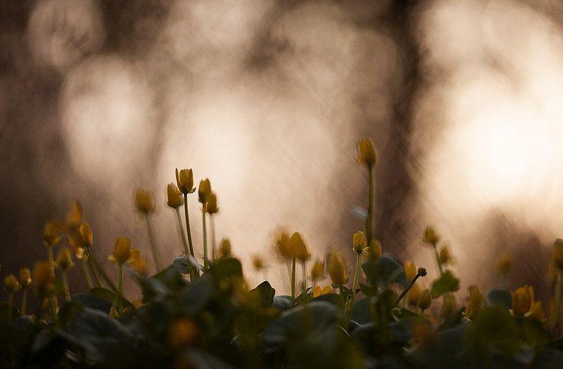 чистяк, весенний закат с чистякомphoto preview