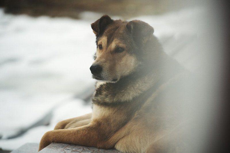 Дворовый пёс, Настоящий друг Другphoto preview
