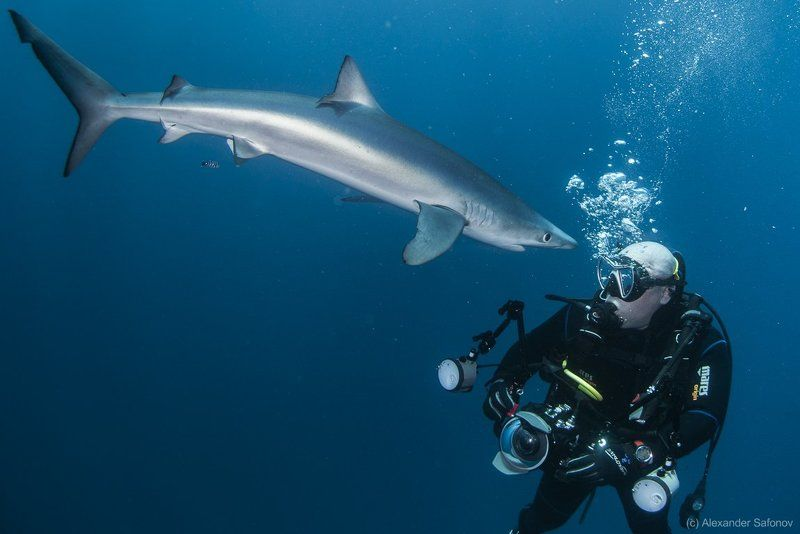 Shark confrontationphoto preview