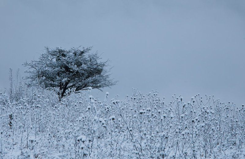 Снежный рассветphoto preview