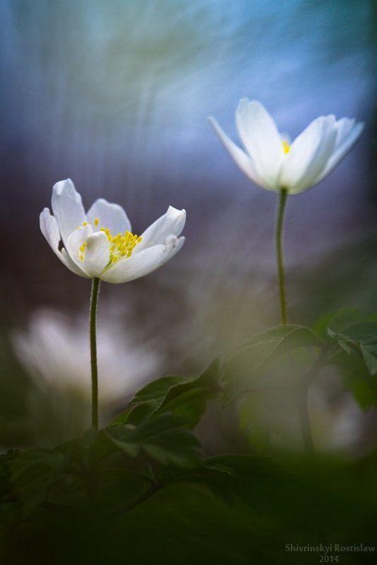 Rostyslav Colourfull springphoto preview