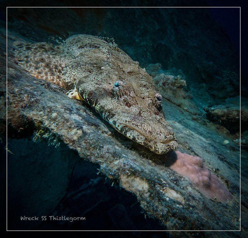 Крокодил-Генаphoto preview