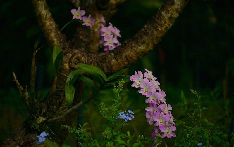 Орхидеяphoto preview