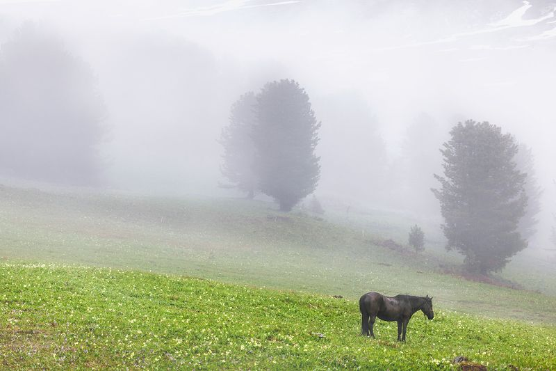 Fog in mountainsphoto preview