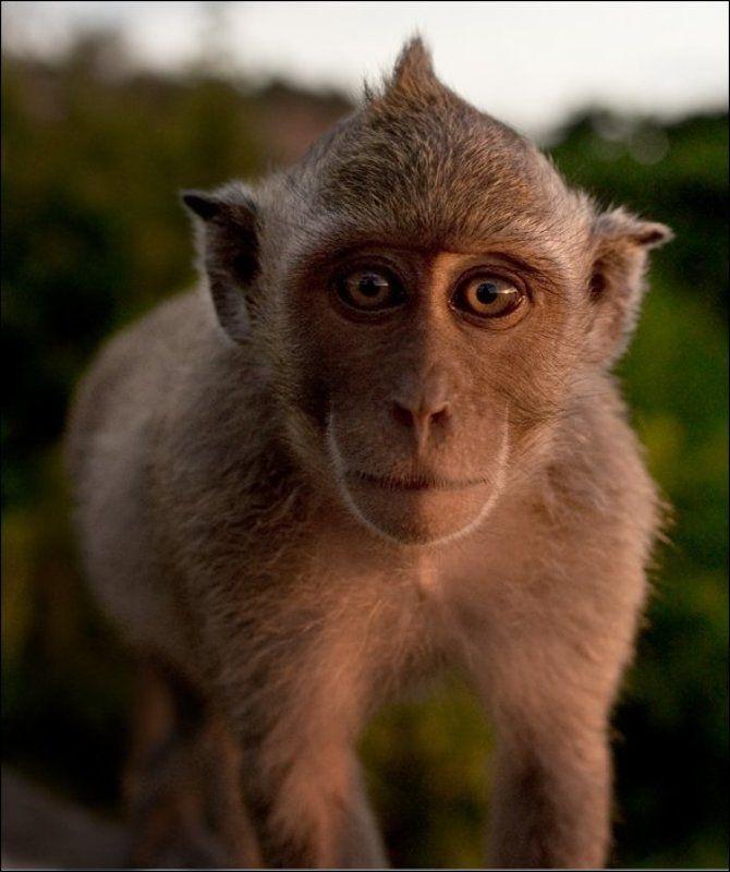 обезьяна маленький ещеphoto preview