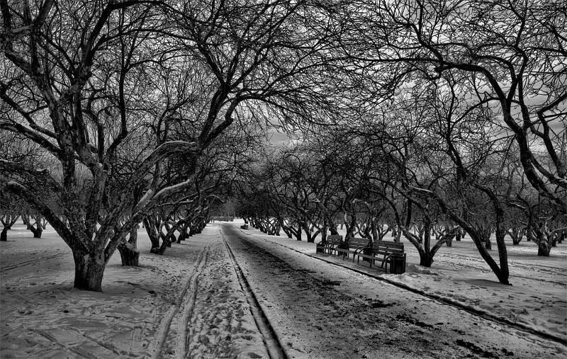 зима,снег,сад,коломенское Небо в веточкуphoto preview