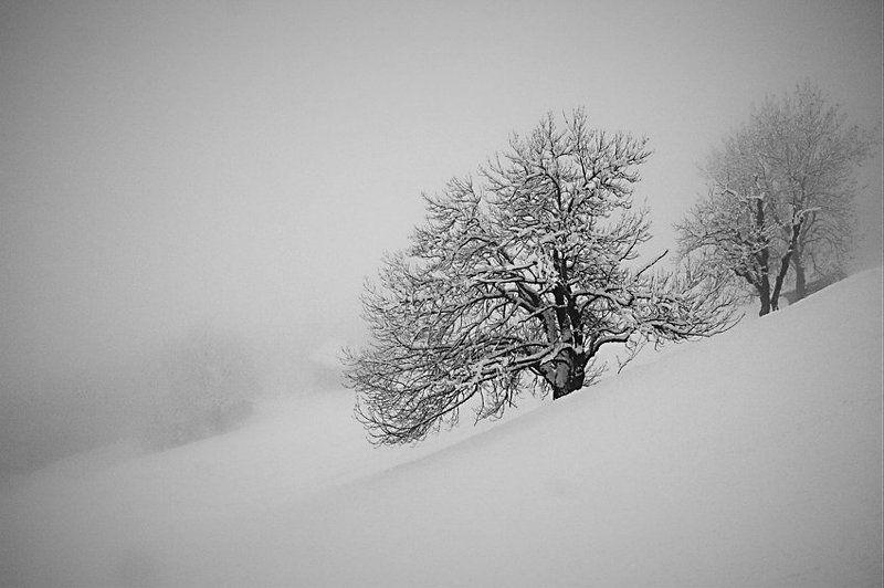 альпы, цель ам зее, облака, дерево Ёжик в туманеphoto preview