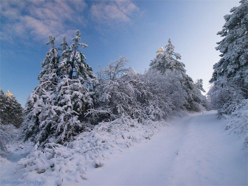 крым, зима, снег, сосны, закат, иней Крымская сказкаphoto preview