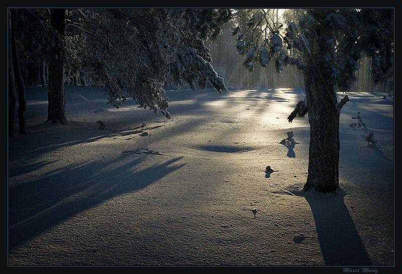 Где живут солнечные зайцыphoto preview