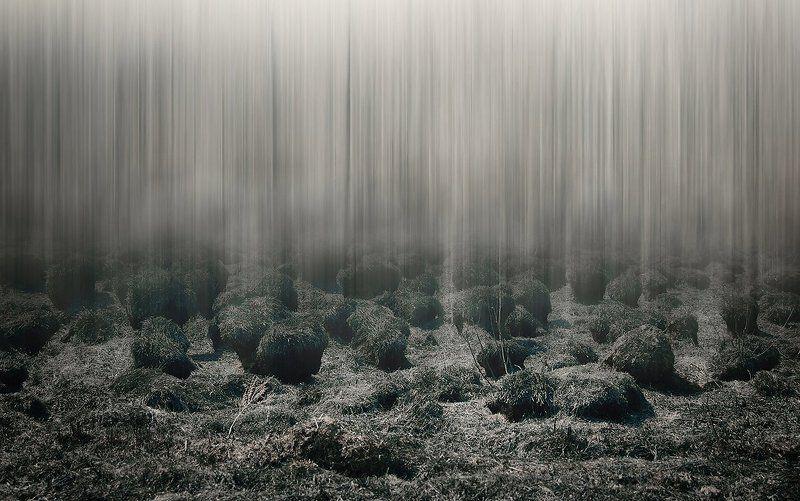 Спутники леса....photo preview