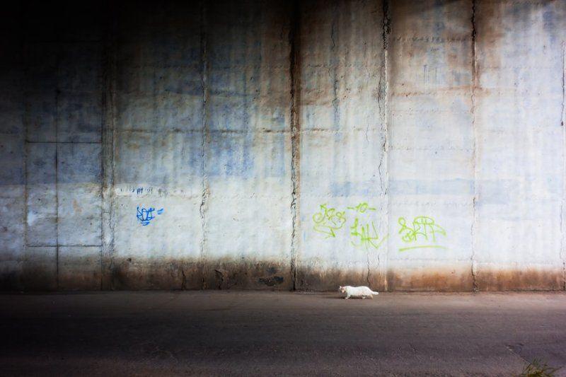 Кот у стеныphoto preview