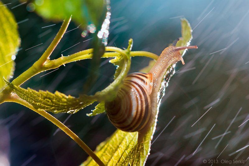 snails,rain, macro, art,   tenderness,  best, oleg serkiz, macrophotography, storm Feeling goodphoto preview