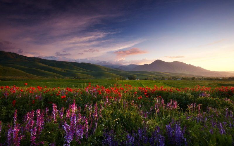 Bishkek, Flowers, Kyrgyzstan, Landscape, Lazyvladphoto, Lazy_vlad, Mountains, Nophotoshop, Poppies, Spring, Бишкек, Весна, Горы, Кыргызстан, Маки, Пейзаж, Цветы Весны беспечная пораphoto preview