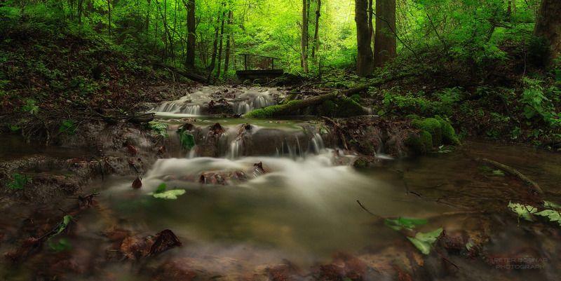 Лесные ресурсыphoto preview