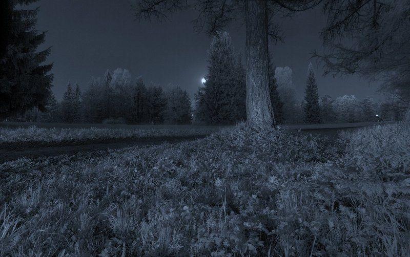 infrared, весна, длинная выдержка, ночь, парк, полнолуние, световая кисть, инфракрасный,  инфракрасное ~121~photo preview