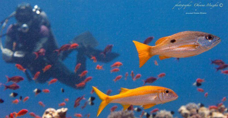 Подводный мир.photo preview