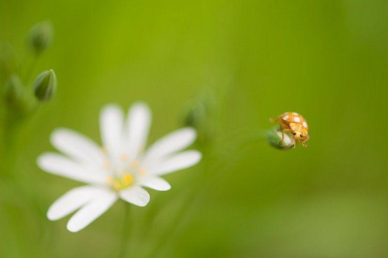 Весна, Жук, Макро, Цветок На счет \
