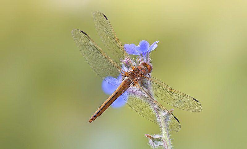 Dragon Flyphoto preview