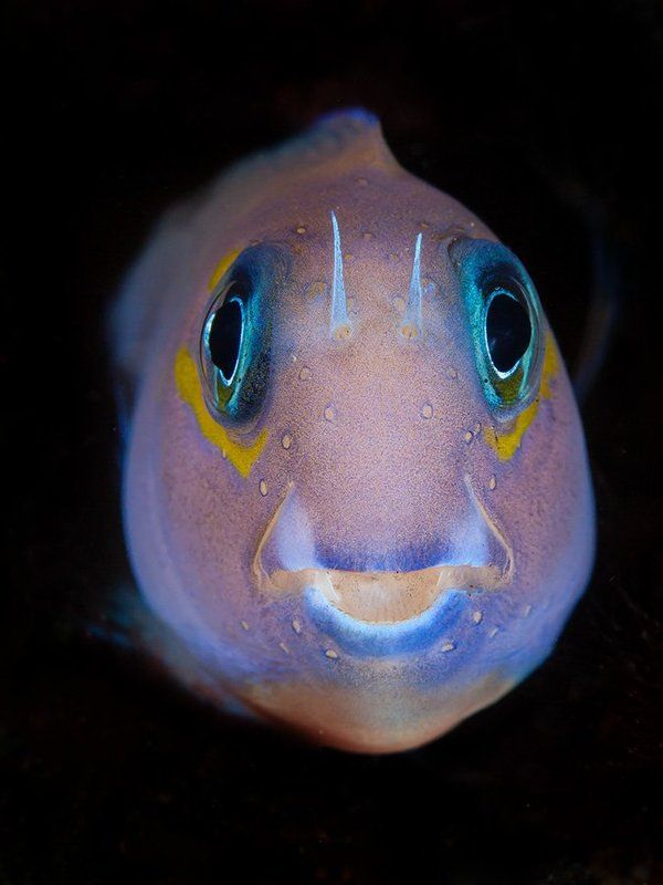 Fisheyesphoto preview