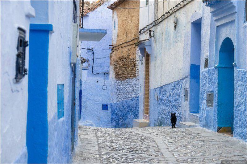 Chefchaouen, Марокко Chefchaouen catsphoto preview