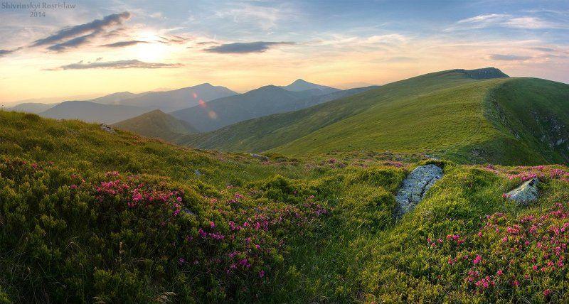 Горы, Карпати, Ростислав. Квіткова Чорногораphoto preview