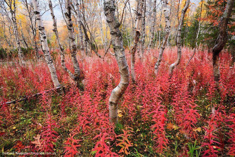 Осень в северном лесуphoto preview