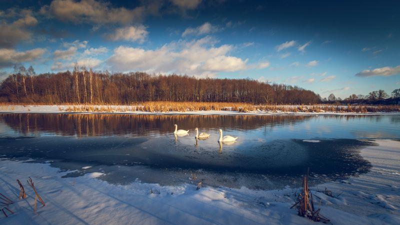 Беларусь, Зима, Лебеди, Лошицкий парк, Минск, Мороз, Парк, Река, Свислочь, Снег семьяphoto preview