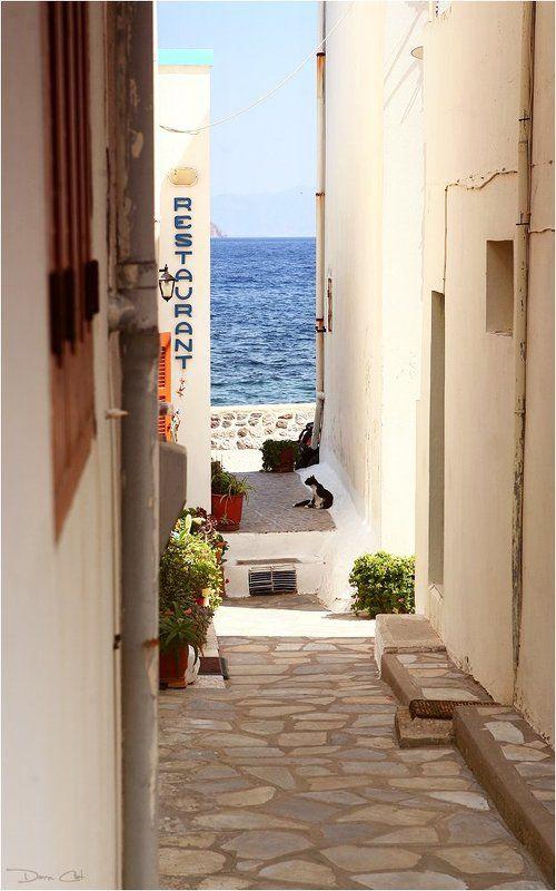греция, остров, нисирос, кошки, портрет, город, улочка По улочкам острова Нисиросphoto preview