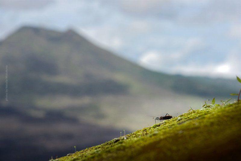 вулкан, бали, таракан как таракан мечтал попасть на вулканphoto preview