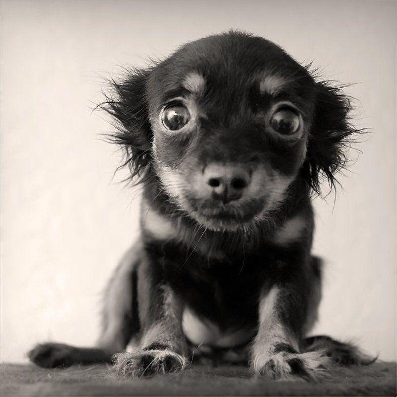 щенок, боится, камеры, 2007 \
