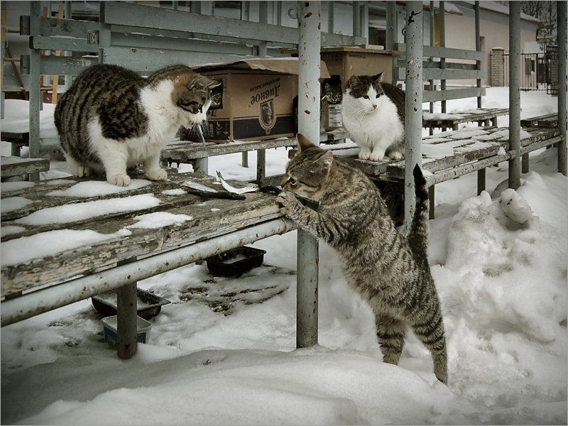 рынок, коты, февраль, холод, выживание, 2007 \