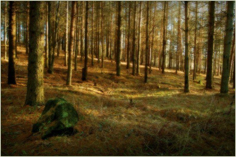 эстония, лесопарк, ягварь, 2008 Лесной Мотив с Камнемphoto preview
