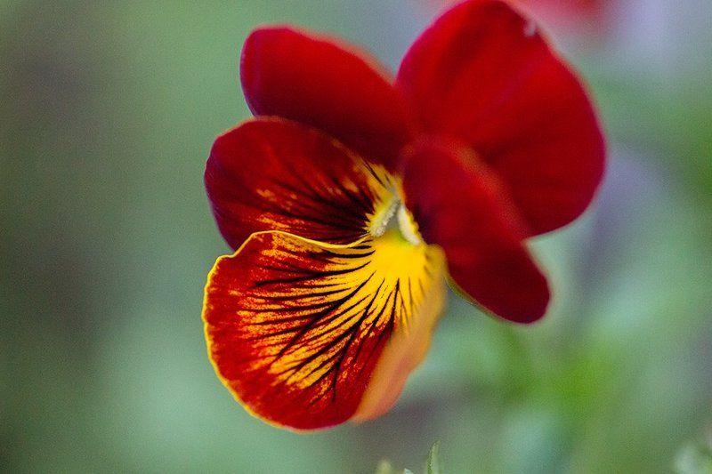 Die Blumenphoto preview