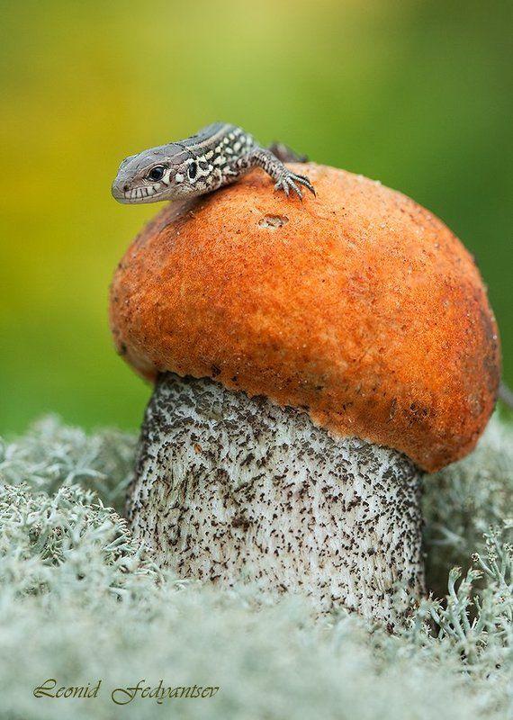 Портрет любопытствующей ящерицыphoto preview